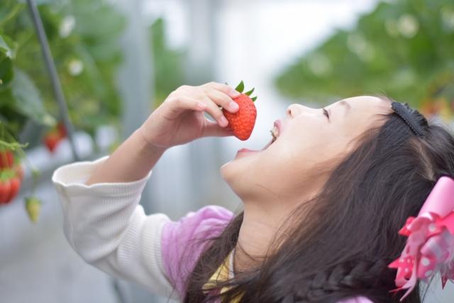 山口県のイチゴ狩り食べ放題おすすめランキングBEST5☆