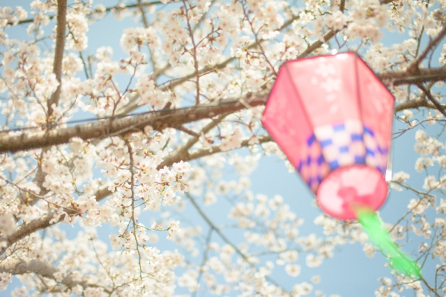 東京のお花見スポットで宴会可能な公園は?おすすめ7選をご紹介!