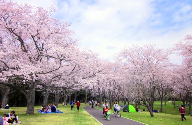 東京の桜の名所で子連れに最適な花見スポットランキングTOP5☆