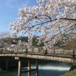 京都の桜の名所ランキングTOP10!2018年の見頃と穴場もご紹介