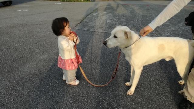 赤ちゃんが犬と触れ合うのはいつから大丈夫?舐めるのは衛生的に悪い?同居の注意点も