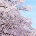 北九州のお花見スポットランキング8選!見頃や穴場もご紹介